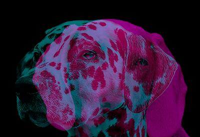 Perros-doble-exposicion